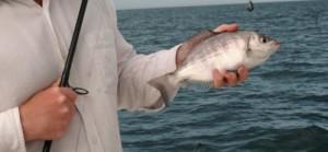 Rencontre à thème pêche
